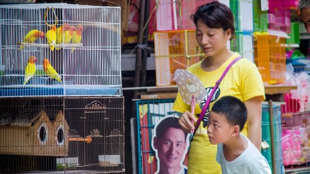 现在说再见太早!陪伴广州人17年的芳村花鸟市场暂不搬