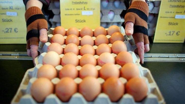 """政府瞒报数量?""""毒鸡蛋""""在德国掀起政治争议"""