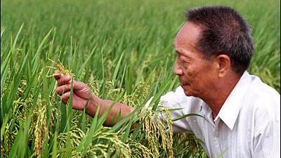 袁隆平院士新成果发布 再也不用担心大米镉含量超标