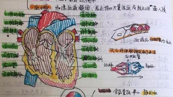 初三女生把科学笔记整理成绘本:每页都有彩色插画