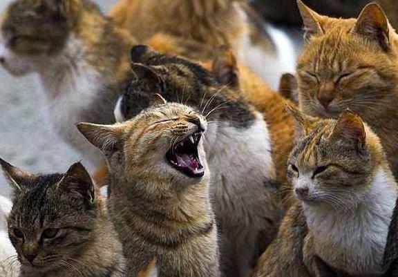 """""""猫热潮""""现象层出不穷 日本进入""""猫型社会"""""""