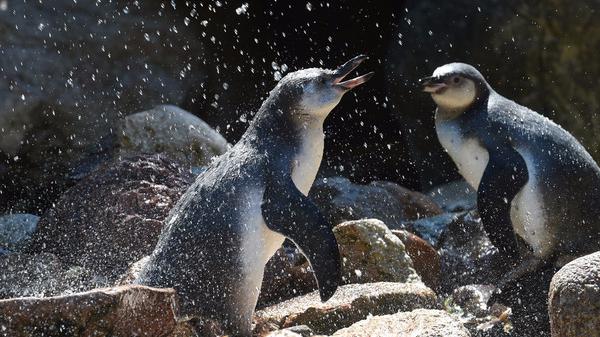 为保护濒临绝种动物 智利政府拒25亿美元开矿计划