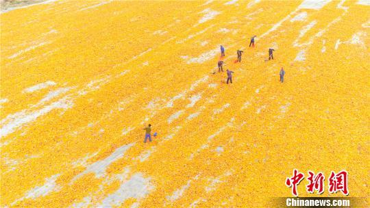 """东北新玉米将大量上市 农业部回应会否""""卖粮难"""""""