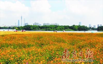 秋日羊城花似锦 在广州开启赏花之旅