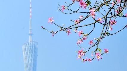 广州旅游有多强?国际知名度全国第三