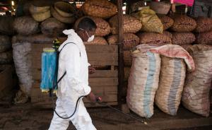 马达加斯加疑似感染鼠疫中国公民已治愈,中使馆提醒保持警惕