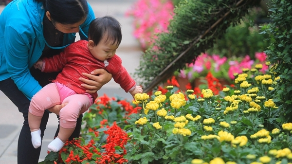 近400品种!羊城菊免费向游客开放