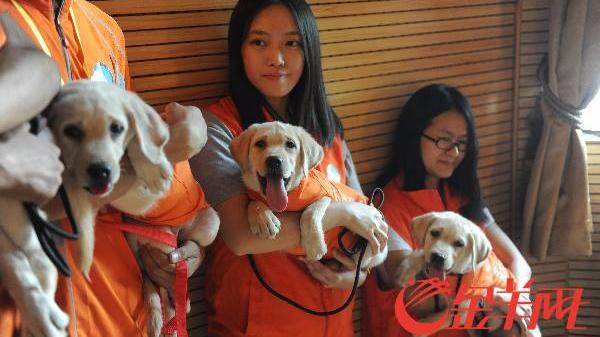 广东导盲犬仅三只 1000天训练换来10年温情陪伴