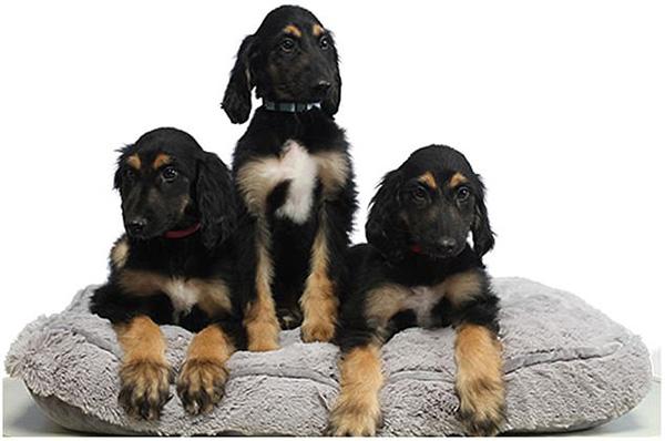 7岁了!世界首只克隆犬的克隆后代公之于众