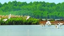 广州海域生态红线首次公布
