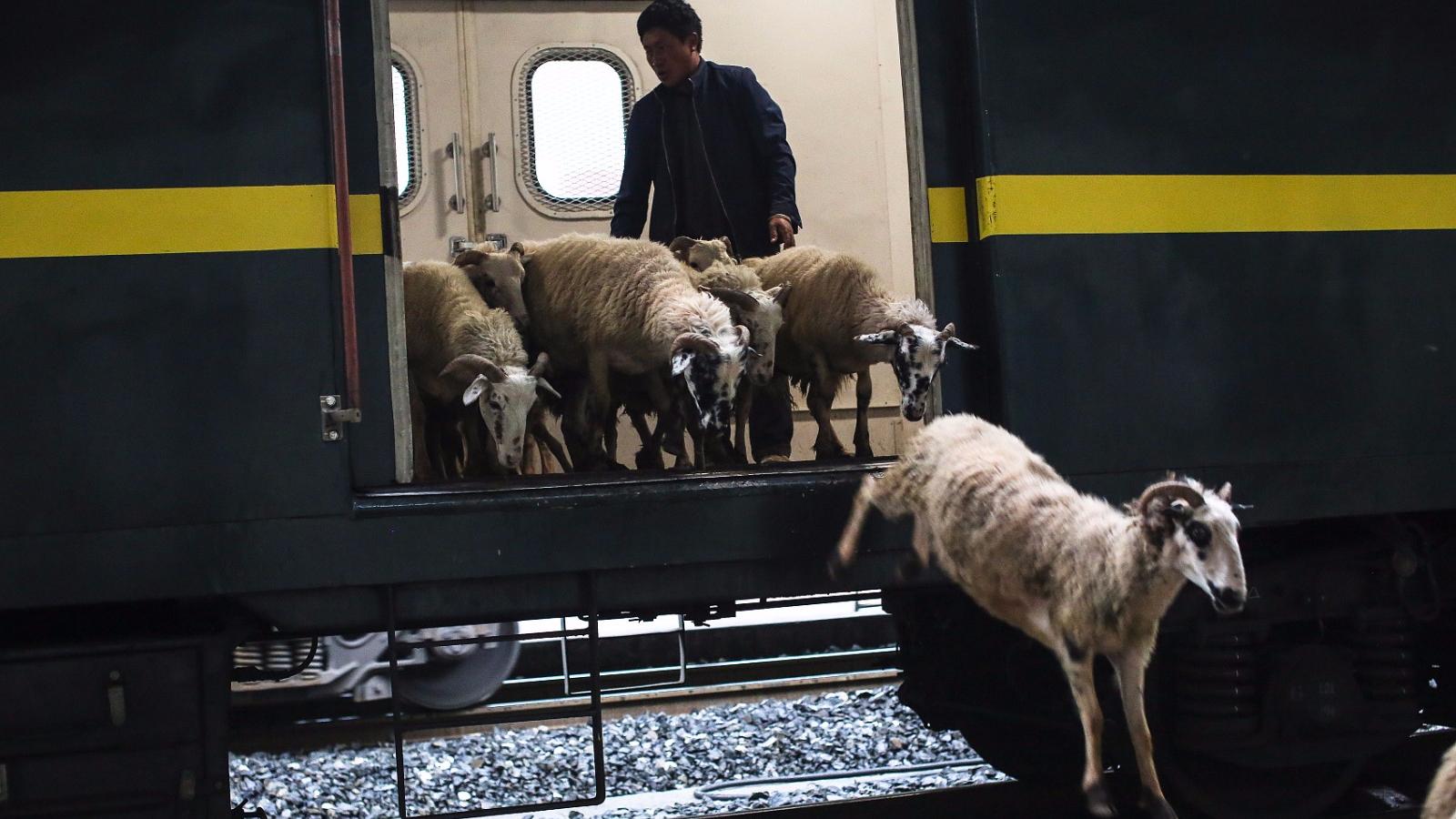 这列火车票价最低2元22年未涨价 鸡羊都能坐