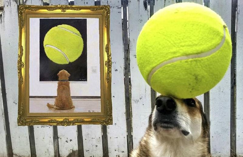 加拿大狗狗头顶物品秀平衡术 功夫了得