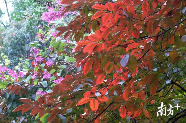 你见过这么色彩斑斓的广州吗?