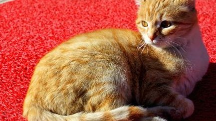 土耳其猫电影节引起观众共鸣