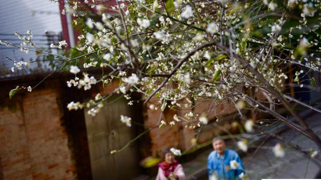 在暖意盎然的冬季,百花盛开惊艳了广州城每个角落