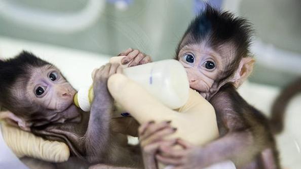 三问中国克隆猴:猴子克隆出来了,接下来要克隆人?