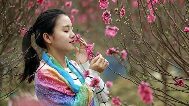 广州有个桃花源!桃花初绽放引得市民寻芳踪