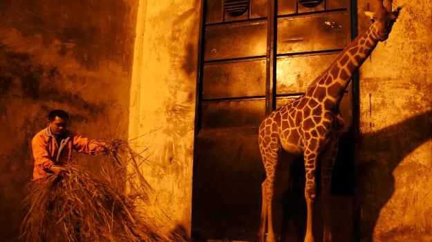 深圳野生动物园防寒用品齐上阵,动物也暖和了!
