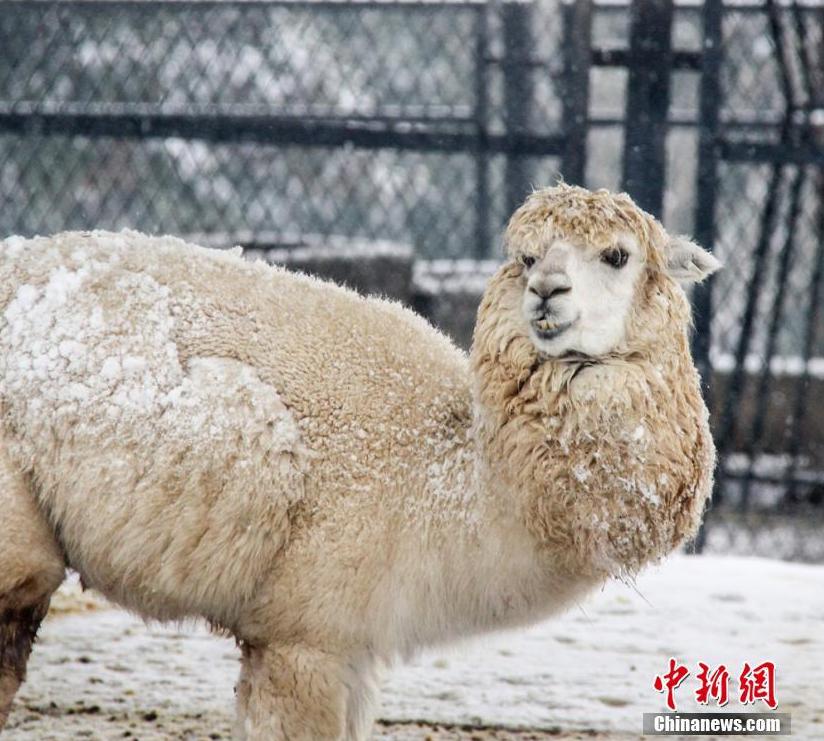 """""""雪封""""无锡动物园 众动物神态""""怡然"""""""