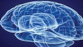 美研究揭示大脑如何学习语言