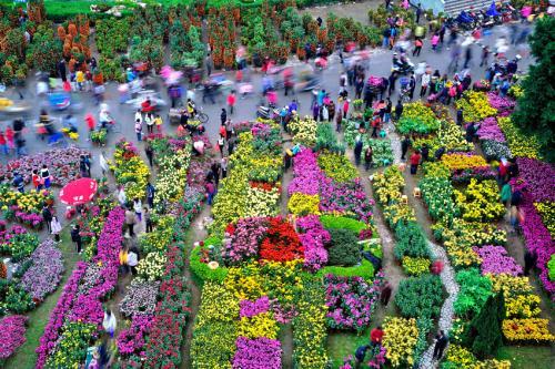 广州最全的花市攻略来啦!11区迎春花市陆续开放