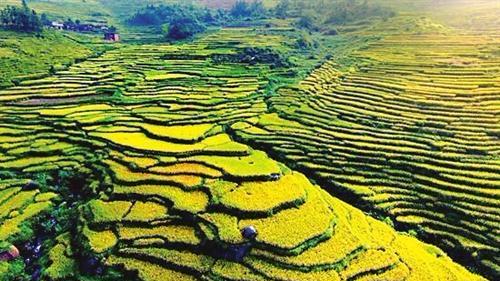 联合国粮农组织:中国南方稻作梯田入选全球农业遗产