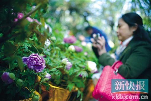 广州打造花城花景 今年再种10万株开花乔木