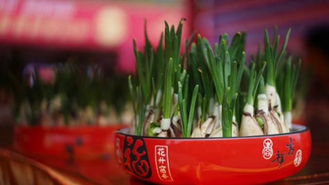 十里馥郁、满城金翠,不下雪的广东用花市征服你!