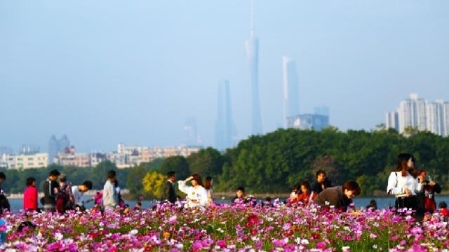 春节黄金周广东省接待游客人数领跑全国 接待游客5564.6万人次