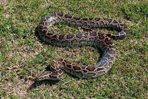 不速之客! 印尼一列火车上出现蟒蛇 吓坏乘客