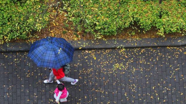 春天:细雨落叶润万春