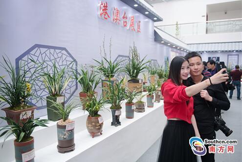 """28届中国(翁源)兰花博览会迎来首个周末,万人排队赴""""兰花盛会"""""""