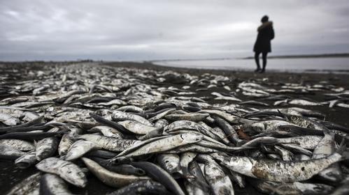 全球变暖若不缓解 全球逾30个地区部分物种或灭绝