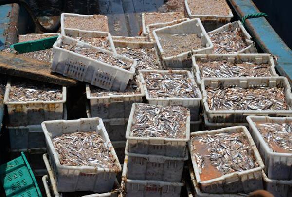 企业偷捕910万公斤海鱼价值2千万 遭天价索赔1.3亿