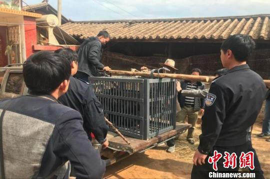 云南丽江一村民误把熊当狗养了3年发现后被没收