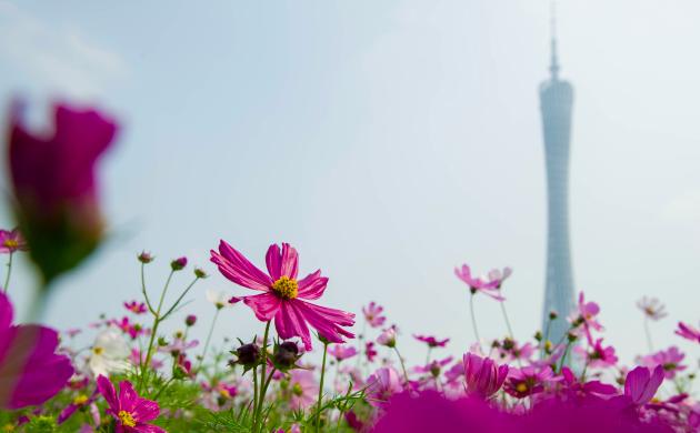 花城打造美丽生态名片