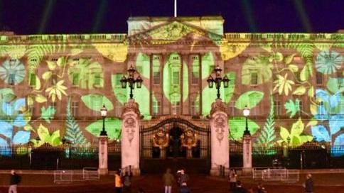 """英国白金汉宫变""""雨林"""" 梦幻光影秀吁关注环保"""