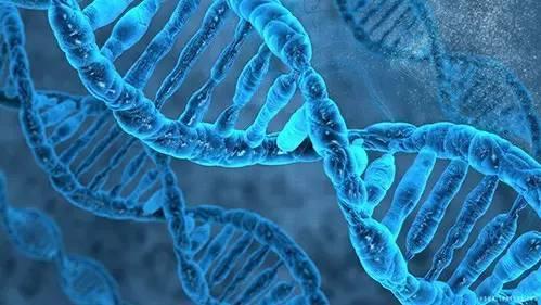 国际团队计划给地球上所有复杂生物基因测序