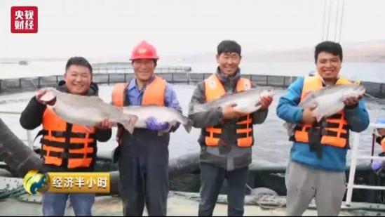 """2600米高原产出三文鱼!青藏高原""""承包""""了国内1/3的市场"""
