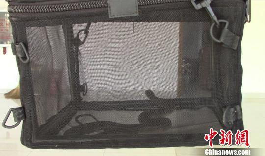 云南一客车神秘包裹藏2米眼镜蛇 吓坏全车人