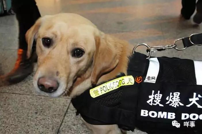 @广州街坊!在广州地铁上遇见这种生物,千万不要慌……