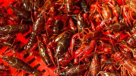 小龙虾产业有多火 去年产值2685亿同比增83%
