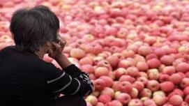 农产品滞销 谁来帮农民走出困境