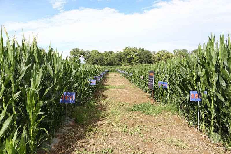 【脱贫攻坚在行动】甘肃广河:同样是种玉米 为何今昔差别这么大