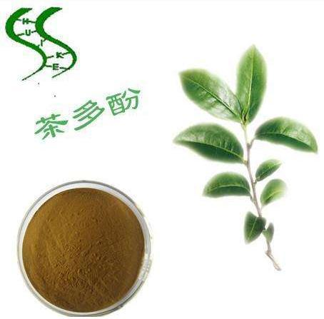 研究表明茶多酚可促进糖尿病伤口愈合