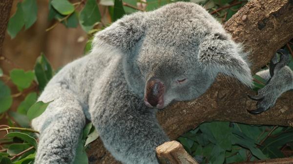 科学家:睡眠超10个小时死亡风险提升30%