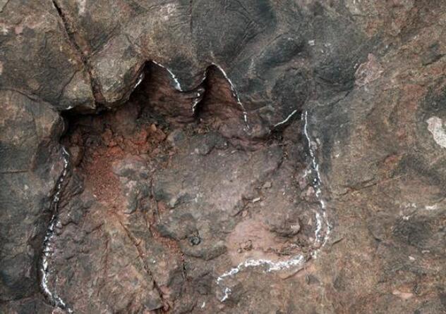 科研人员发现中国最大侏罗纪早期蜥脚类恐龙足迹群