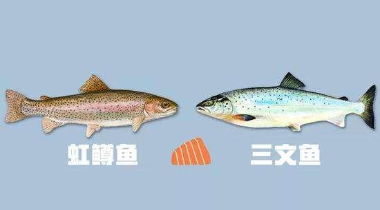 """虹鳟为何一定要傍""""三文鱼""""的大名"""