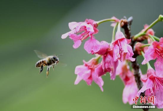 危害蜜蜂及昆虫生存 加拿大拟限用两款类尼古丁农药
