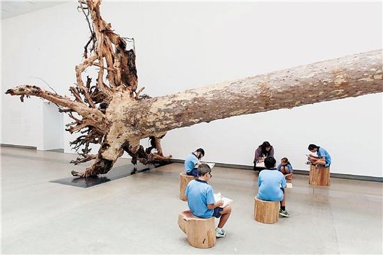 蔡国强 桉树